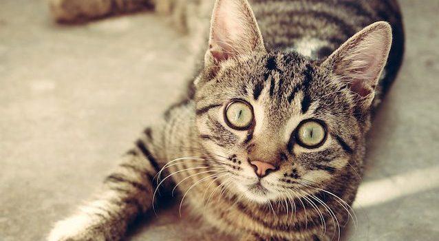 Sistema di allarme con gatti